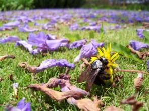 bee loves flower