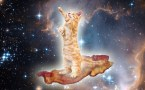 bacon cat
