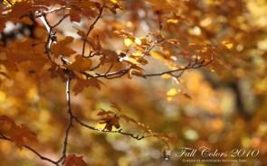 varying seasons