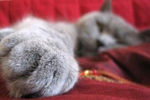 Generic Cat Paw