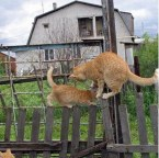 Cats Passing Each Other