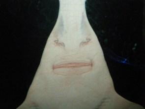 Sawfish smile wall