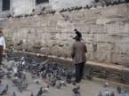 Feeding ?irds in Istanbul