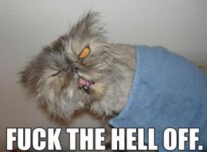 Hermit Cat