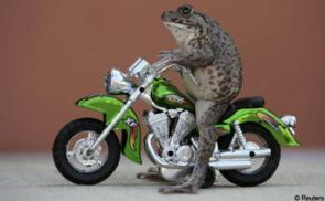 frogs are bad ass