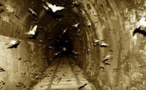 Bat tunnel