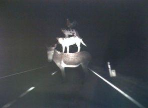 Roadkill suicide pyramin