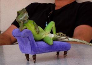 Chillin' Lizard