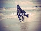 I am a sea horse