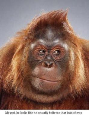 Judgmental Ape