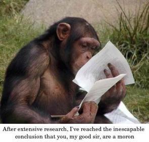 Judgemental chimp