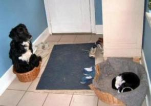 Cat lays down some major ownage to the dog