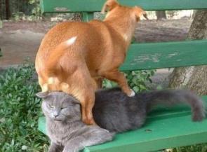 Dog Sitting On Cat