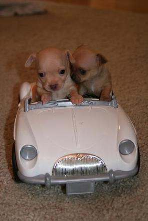 Cruisin' Dogs