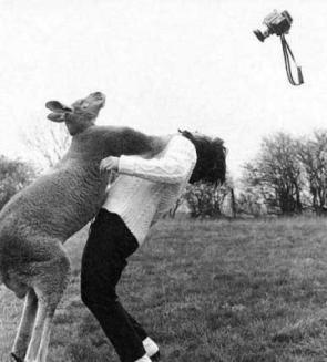 Kangaroo Pwnage