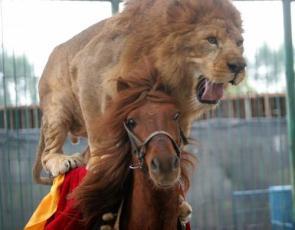 Horse Riding Lion