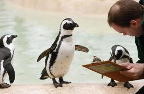 Penguin Proofreading Services