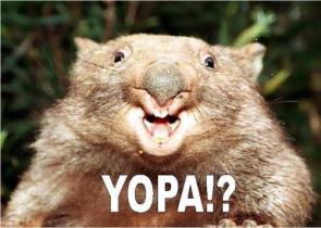 YOPA!!!