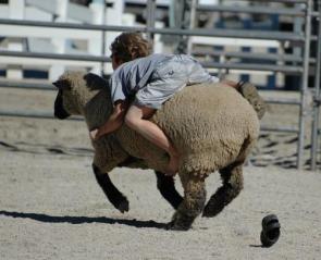 Lamb Rider