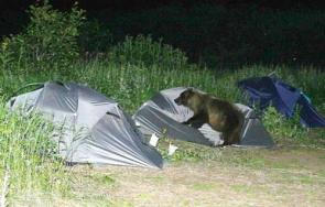 Bear Alarm Clock for Camping