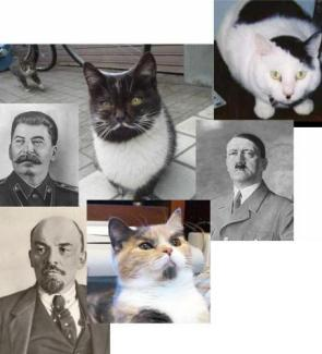 Dictator Cats