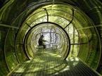 Glass Hermit Man