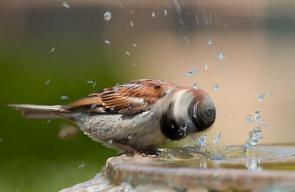 Bird Head Spin