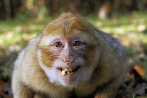 Creepy Monkey