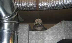 Bunker Bob