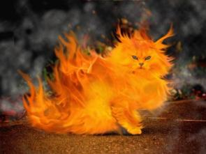 Fire cat – ouch?