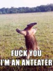 Fuck You I'm An Anteater