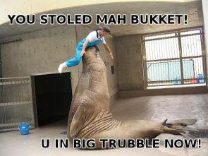 teh bucket revenge