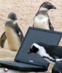 Penguins on the net