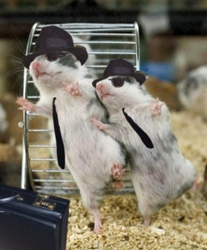 hamsters dance – Blues Brothers style