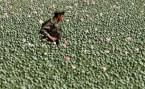 Afghan Soldier Field of Poppies