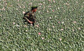 Afghan Soldier Field of Poppies