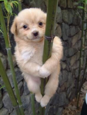 Blonde Pole Dancer