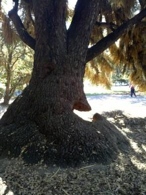 Nom Tree