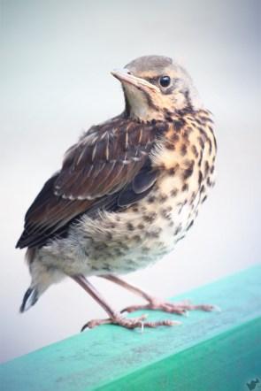 nameless bird