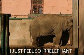 I just feel so irrelephant