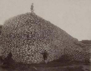 Bison skull pile circa 1870