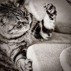 Stoned kitty
