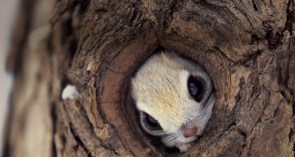 Squirrel in tree wallpaper