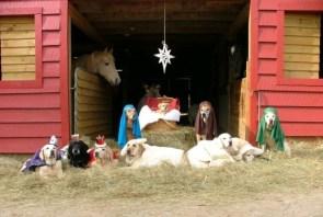 Doggy Nativity