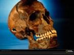 Prehistoric Human Skull