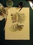 watercolor bones