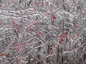 Frozen tree wallpaper