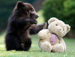 Bear Vs. Teddy Bear