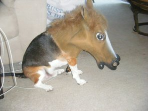 Dog with Sara Jessica Parker Mask