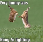 every bunny was kung fu fighting